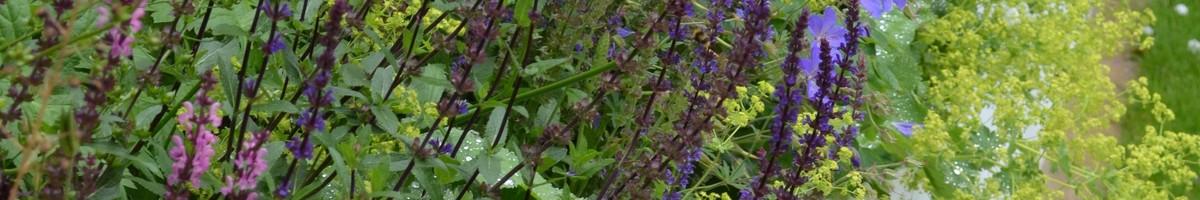 tom howard garden design and landscaping london greater london uk sw19 - Garden Design Uk