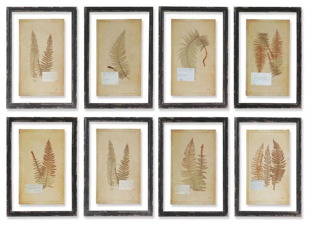 Framed Vintage Fern Prints, Set of 8 - Rustic - Prints And Posters ...