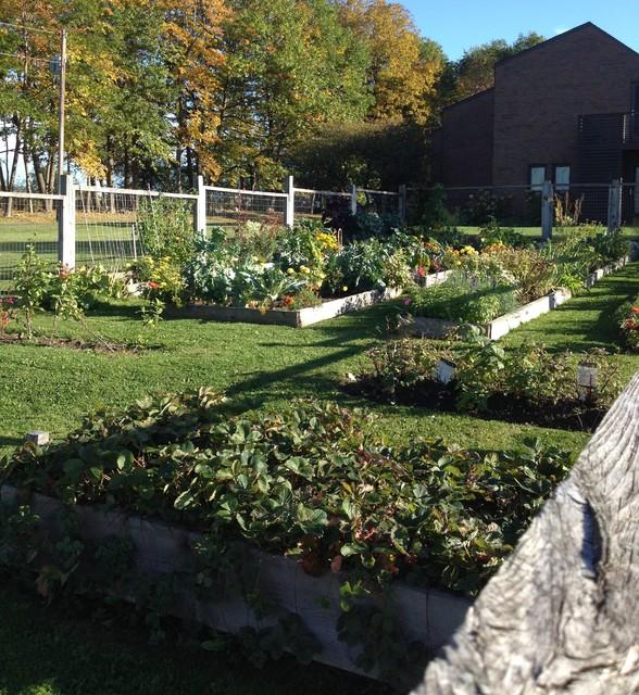 vegetable garden. Black Bedroom Furniture Sets. Home Design Ideas