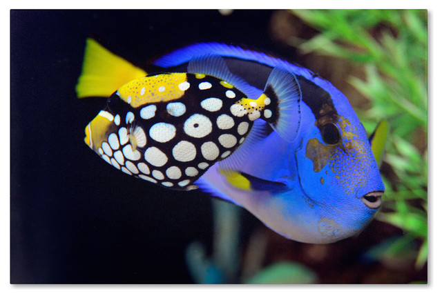 39 colorful tropical fish 39 canvas art by kurt shaffer for 405 tropical fish