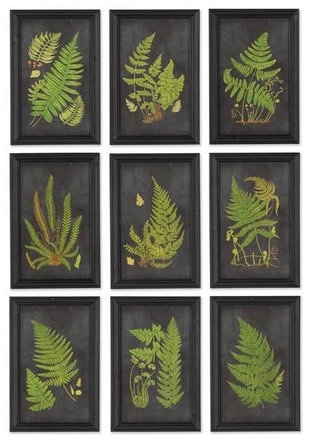 Framed Fern Botanical Prints Set Of 9 Tropical Prints
