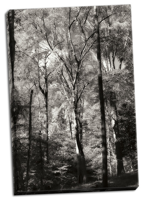 Fine Art Photograph Autumn Cathedral Ii Fine Art Paper