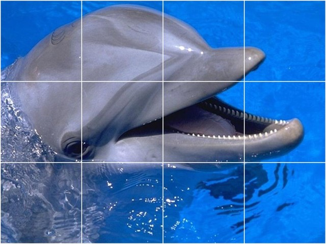 Picture tiles llc dolphin picture kitchen bathroom for Dolphin tile mural