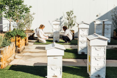 Taking Flight: The Couple Bringing Bees to Melbourne Rooftops