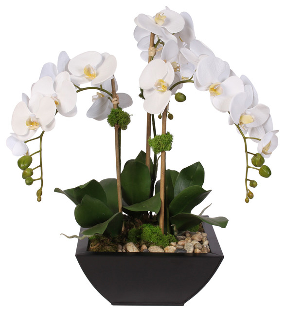 Real Touch Arrangement Of White Phalaenopsis Orchid Succulents In A Metal Pot Contemporary Artificial Flower Arrangements By Jenny Silks