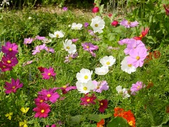 How to Perk Up Your Fading Late Summer Garden
