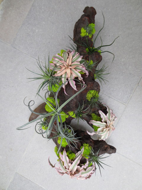 Air Plant Installations Contemporary Landscape Los