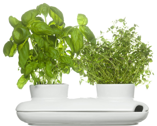 Modern Indoor Pots and Planters For Less | Houzz
