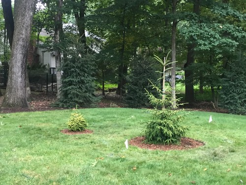 Help me design a conifer garden for Help me design my garden