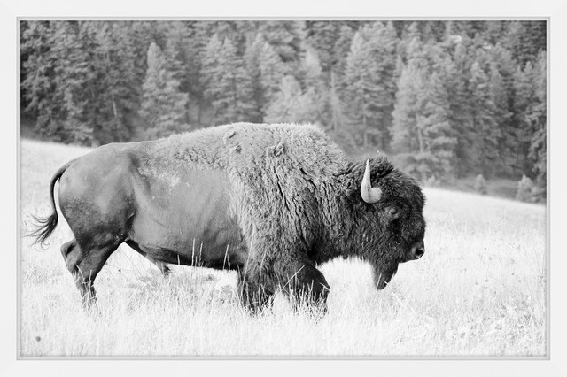 """Marmont Hill, """"buffalo Grazing"""" Framed Painting Print, 60x40. -1"""