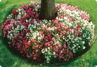 plants around the base of a tree are harmful