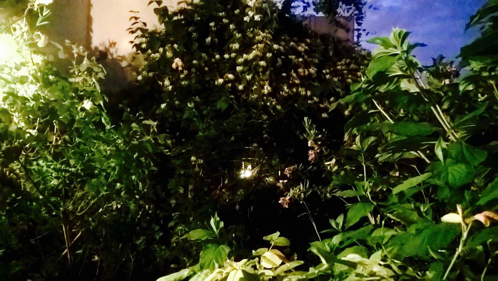 Réhabilitation de jardin