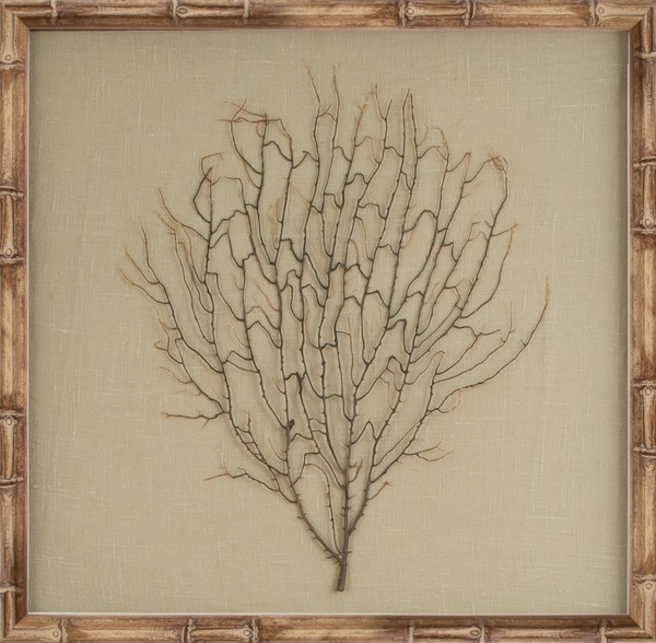 Mirror Image 30071 Natural Coral Sea Fan Framed Art - Beach Style ...
