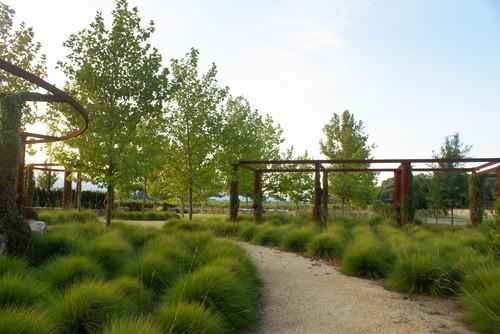 Ornamental grass meadow for Modern ornamental grasses