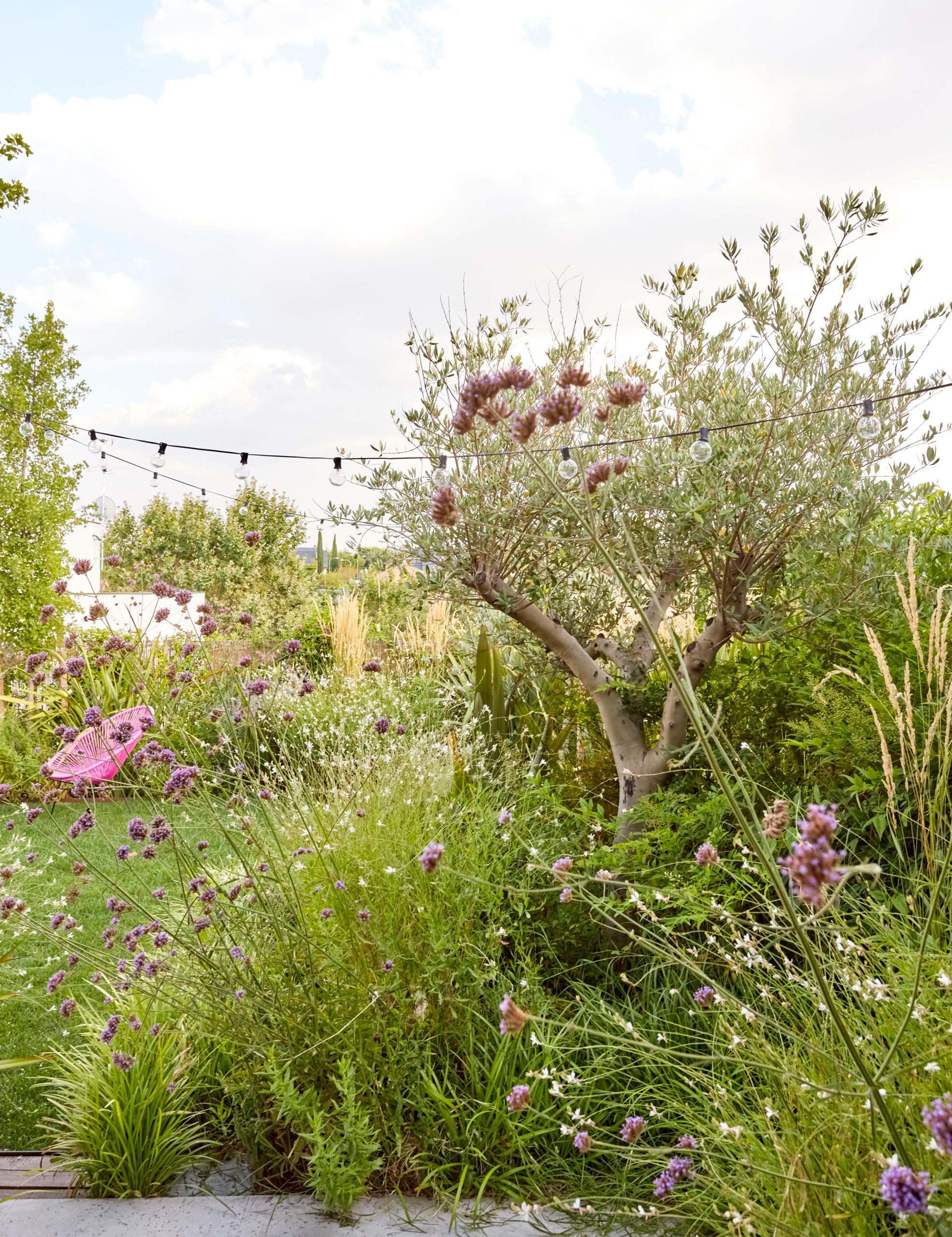 Jardín frondoso y ordenado en Pozuelo