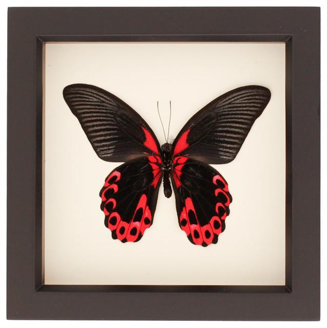 Real Butterfly Framed Art Frame Design Amp Reviews