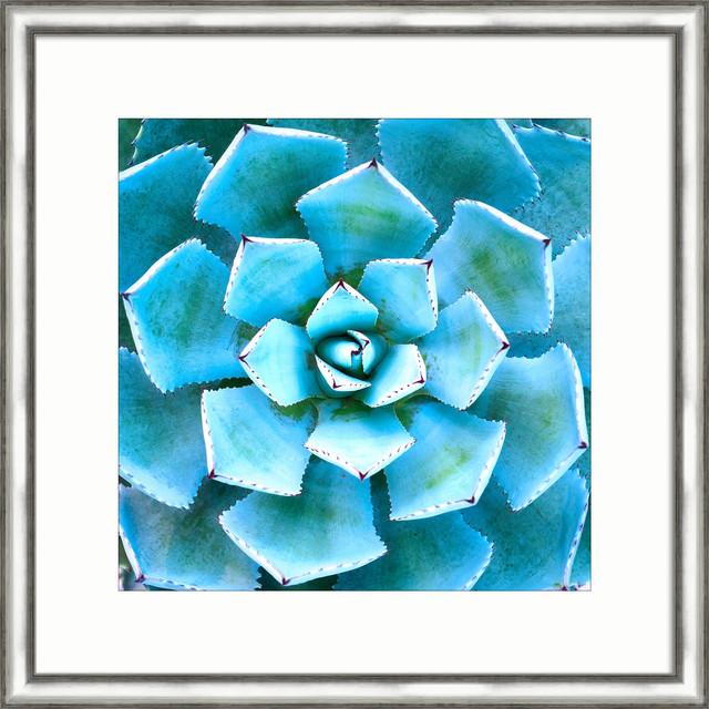 Desert Blue I.