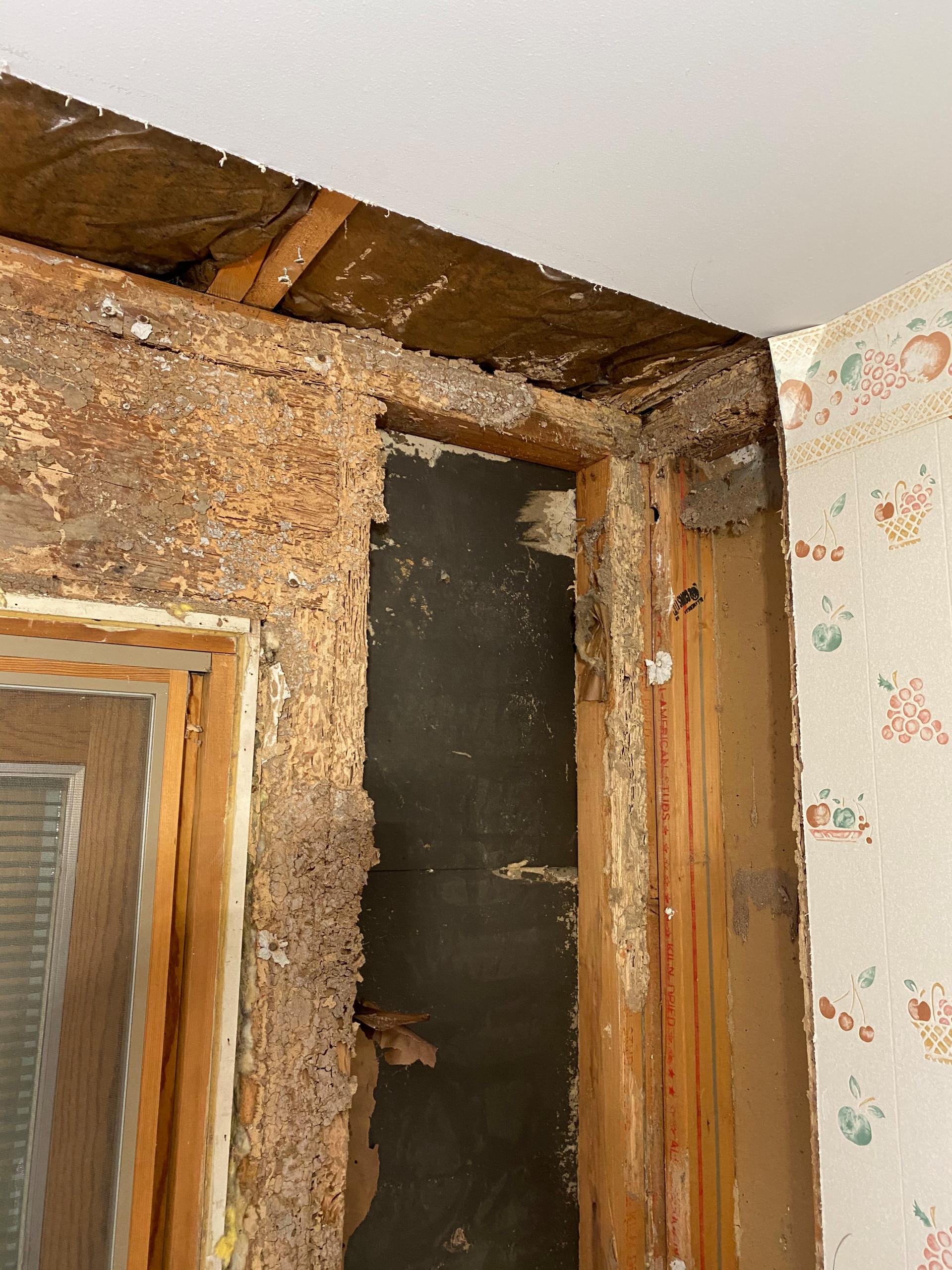 Bowie Termite Damage Repair
