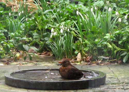 Garden Water Features Tips For Picking The Perfect Style For