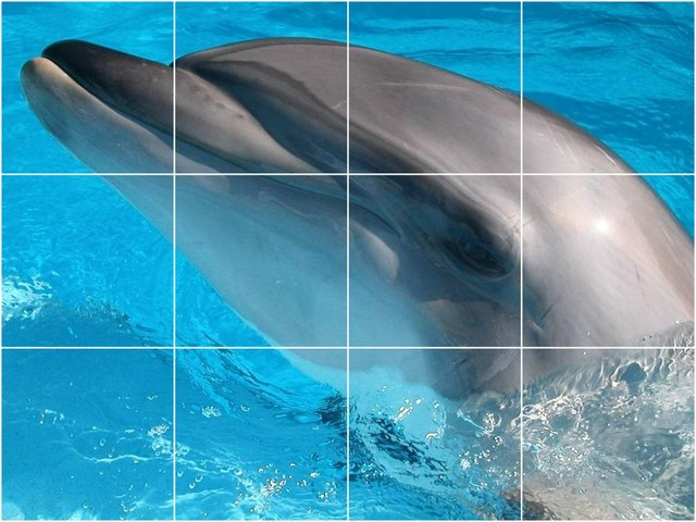 Picture tiles llc dolphin picture wall back splash tile for Dolphin tile mural