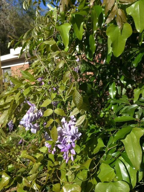 Purple Flowers : home design from forums.gardenweb.com size 500 x 666 jpeg 146kB