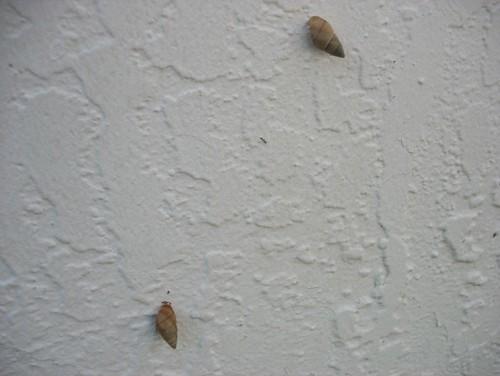 Infestation of snails in my backyard. Should I be concerned?