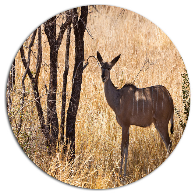 Grants Gazelle Standing In Long Grass, Animal Round Wall Art ...