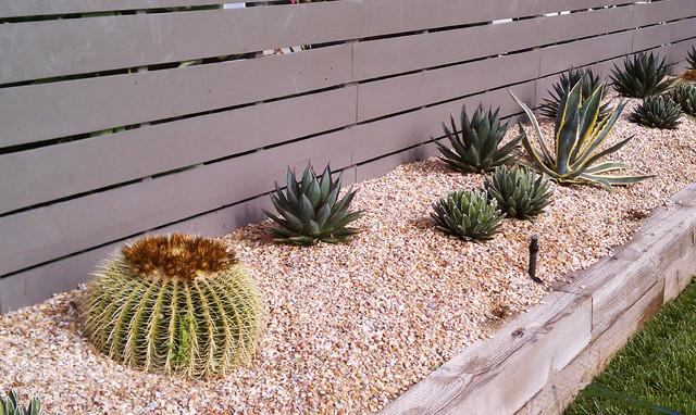 Superior Cactus And Succulent Garden Mediterranean Landscape