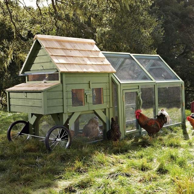Alexandria Chicken Coop and Run