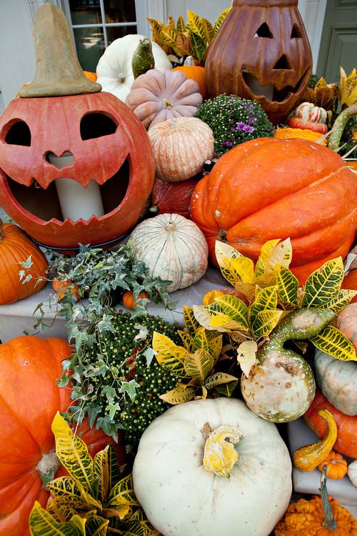Essiccazione Zucca Di Halloween.Come Intagliare La Zucca Di Halloween Guida Fai Da Te
