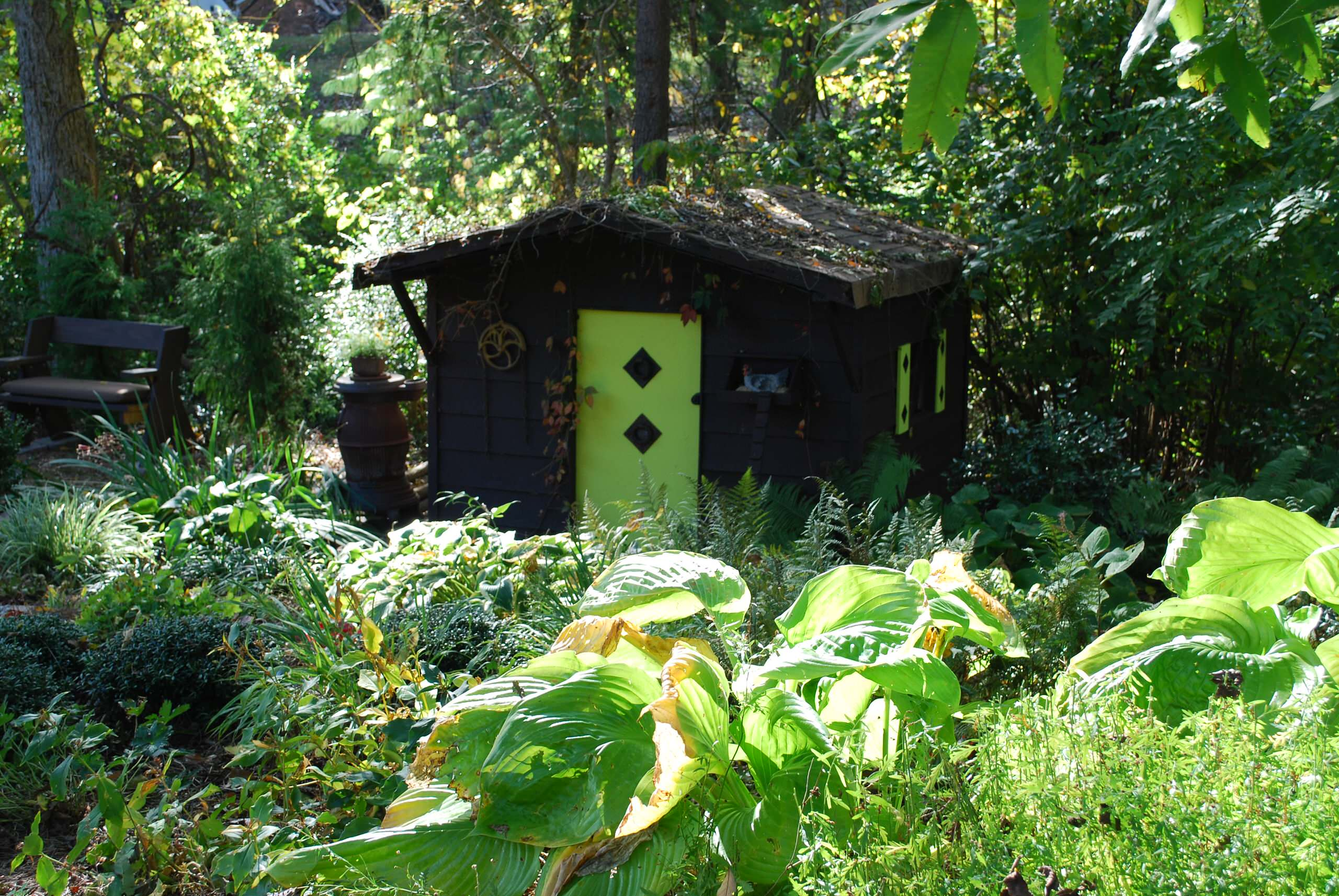 Garden Shed with hostas.