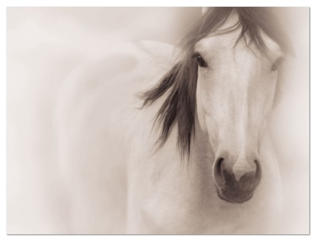 Horse photography on canvas • large wall art 30x40