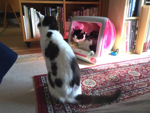 【Houzz】猫と人の幸せな暮らし:「福を招く猫」千葉ちゃんと「猫と建築社」の日常 10番目の画像