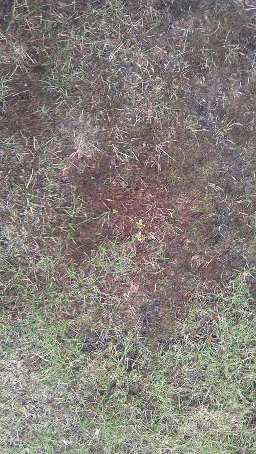 Help me save my yard for Help me design my garden