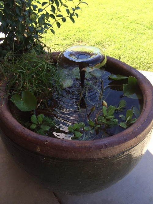 Container ponds with fish house of fishery lovers for Container ponds with fish