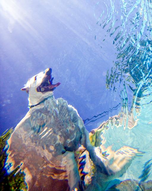 Underwater Photographaph u0026quot;Fat Dogu0026quot; - Contemporary - Prints ...