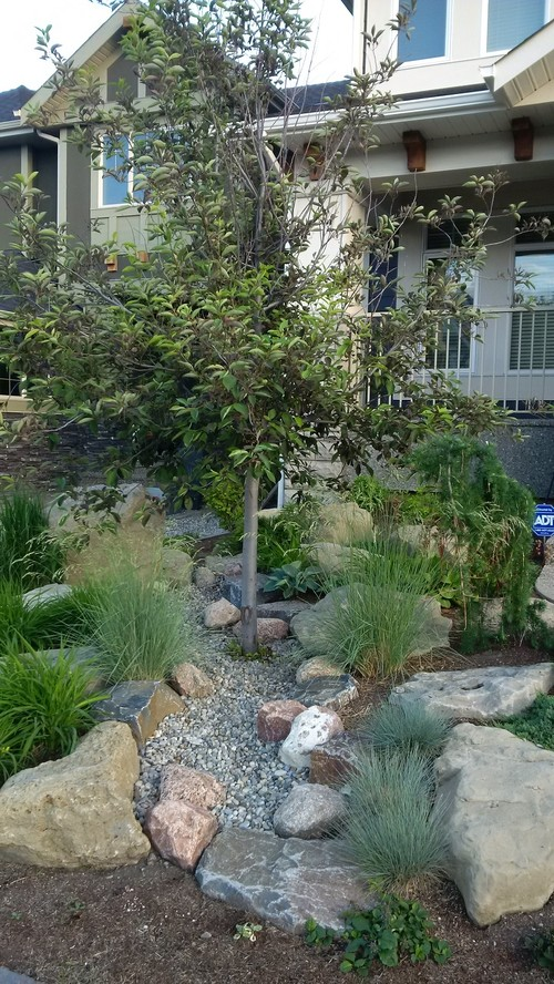 Help me pick a front yard tree replacement for Help me landscape my front yard