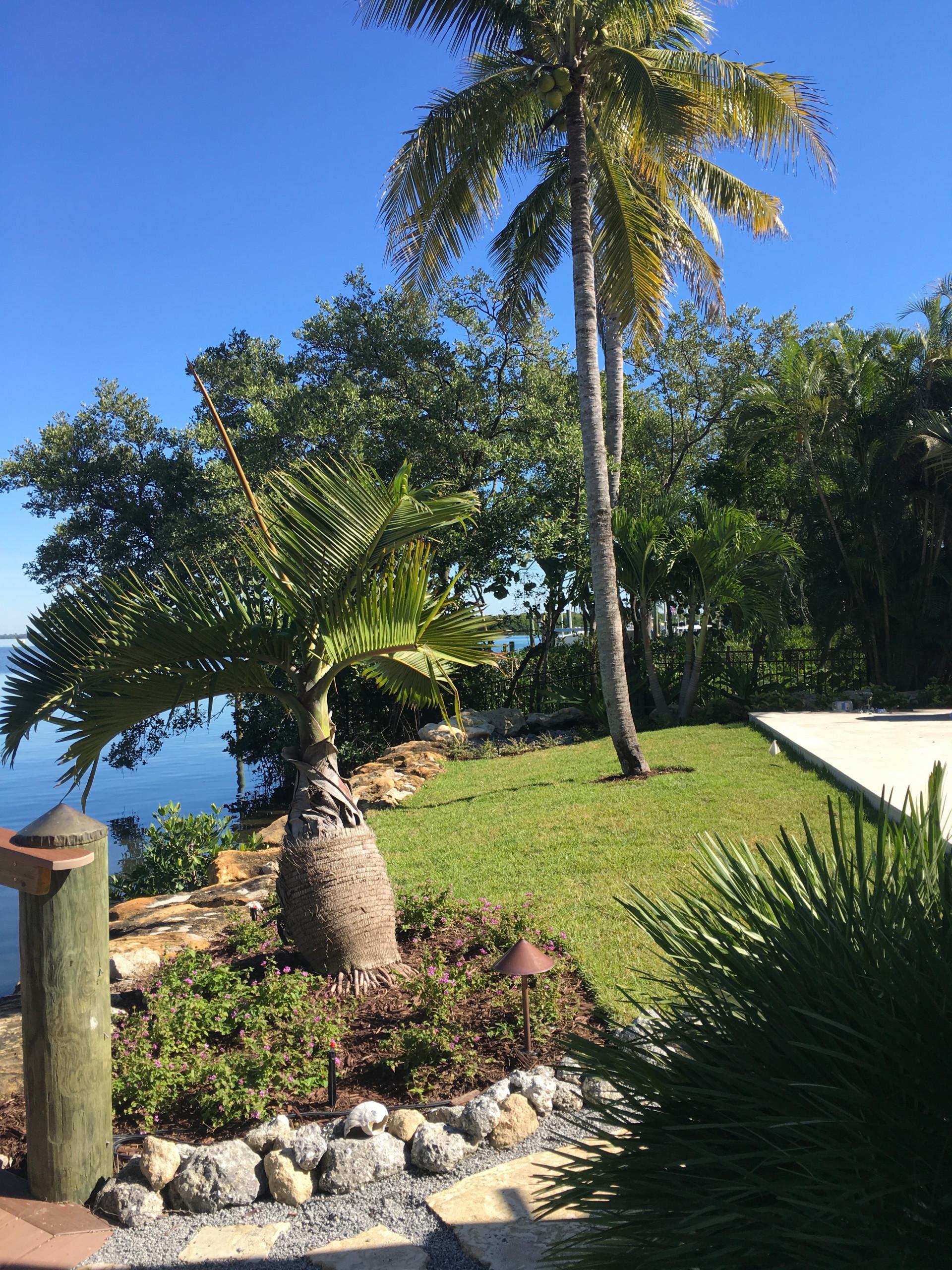 Dream Island Paradise