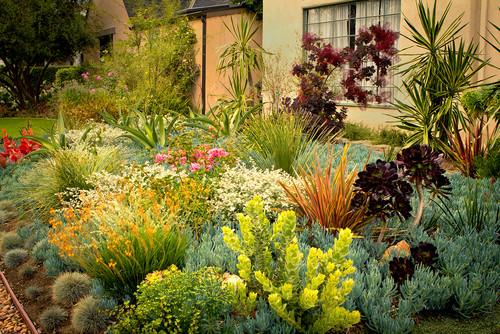 8 Colorful Drought Tolerant Landscape Designs