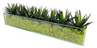 Agave In Rectangular Glass Box With Green Moss Traditional Artificial Flower Arrangements