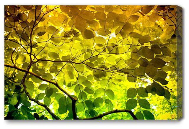 "Mysterious Leaves - Nature Art Canvas Print, Medium 36"" X 24"""