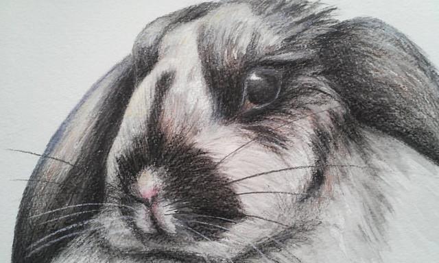 Bunny Watercolor Pencil Drawing Floppy Ears Original Drawing 9 X12