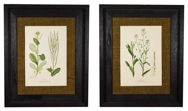 Original Vintage 1910 Botanical In Rustic Frame, Set of 2
