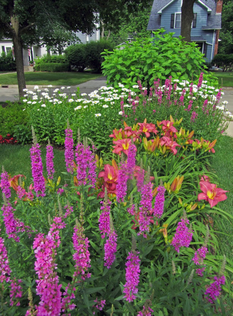 Plant identification needed salvia or butterfly bush mightylinksfo