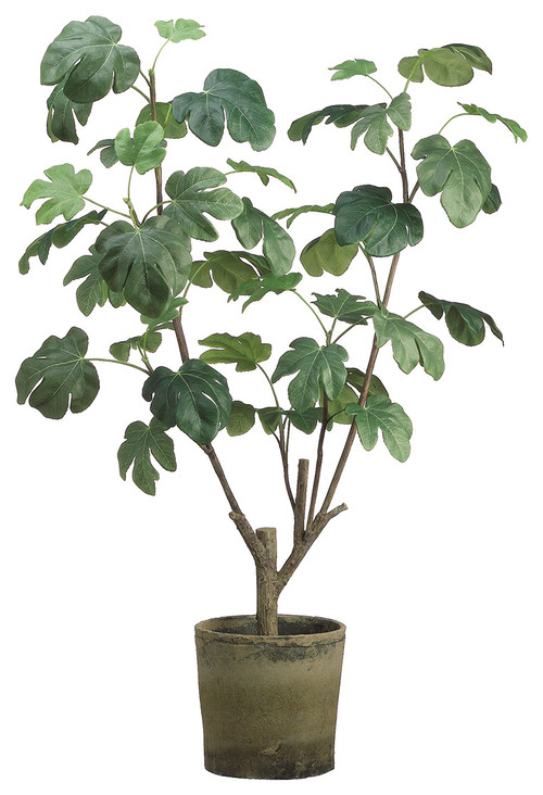 "48"" Fig Plant, Clay Pot Green"