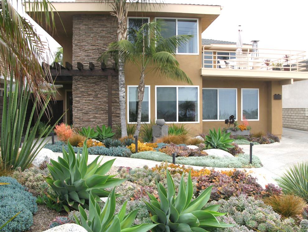Seaside Colorful Succulent Garden - Contemporary - San ...