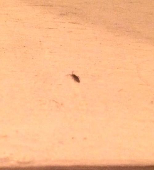 Succulent Bug ID