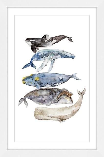 """whale Species"" Framed Print By Rachel Byler."