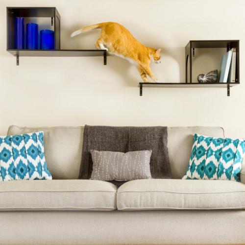 Blog Home Pet Insurance Blog Pets Best Insurance