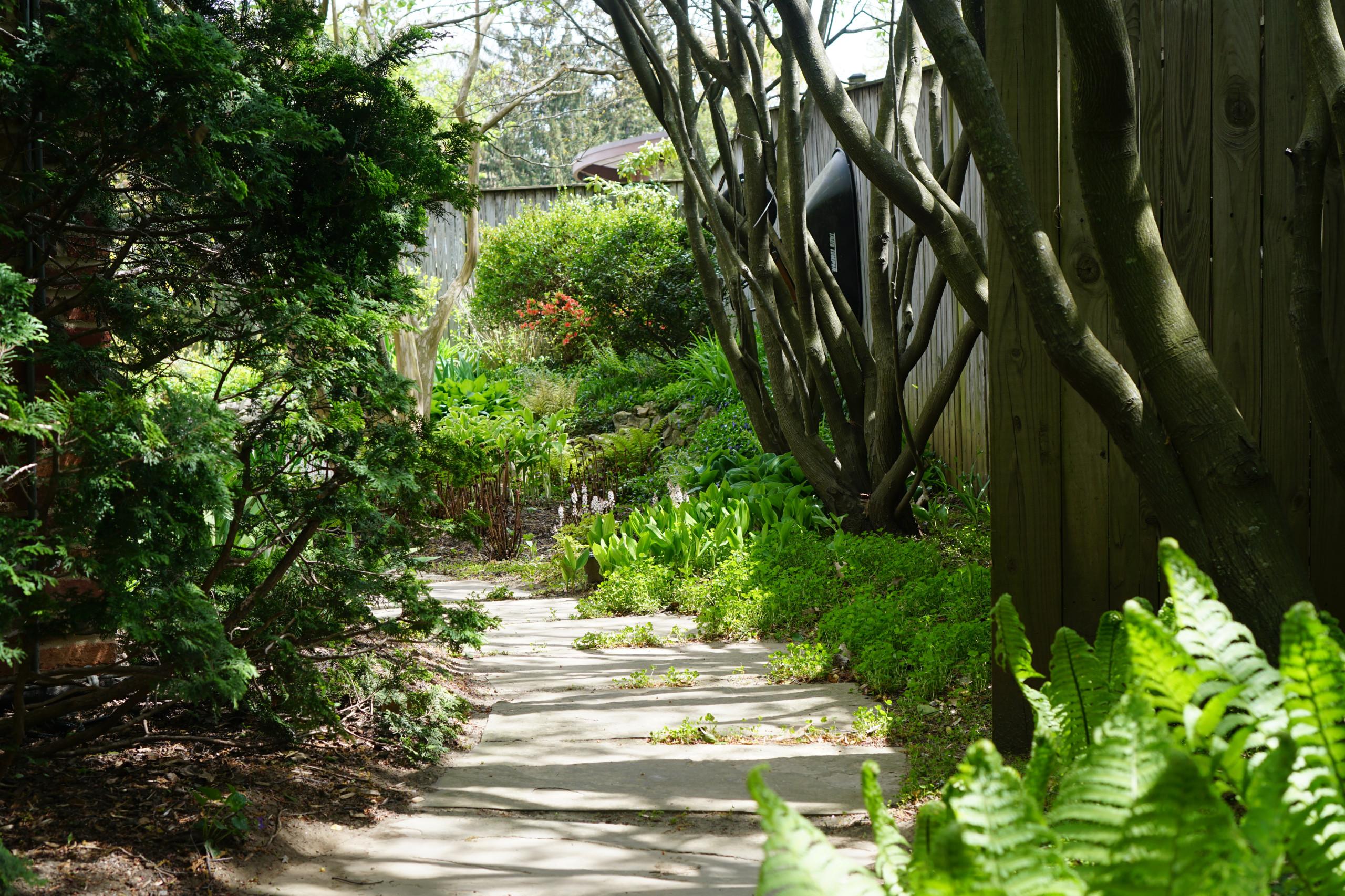 Mid-Century Modern Home Rear Garden